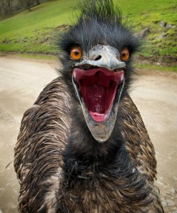 Attack of the Emus